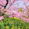 Download Coloful Spring Wallpapers Collection