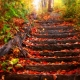 Free Download Beautiful Autumn Leaves Wallpaper Collection