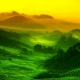 Beautiful Green Fields Wallpaper Collections