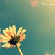 Summer Wallpaper Collection –  Take a Look and Enjoy Summer