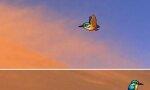 Fun with Birds On Desktop – Flying Birds On Your Desktop